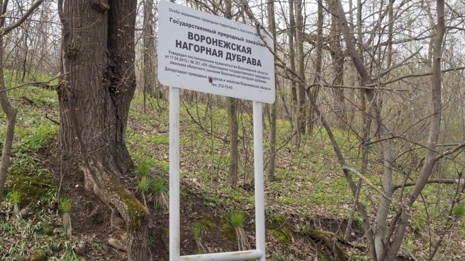 Воронежские депутаты проголосовали за строительство дороги через Нагорную дубраву