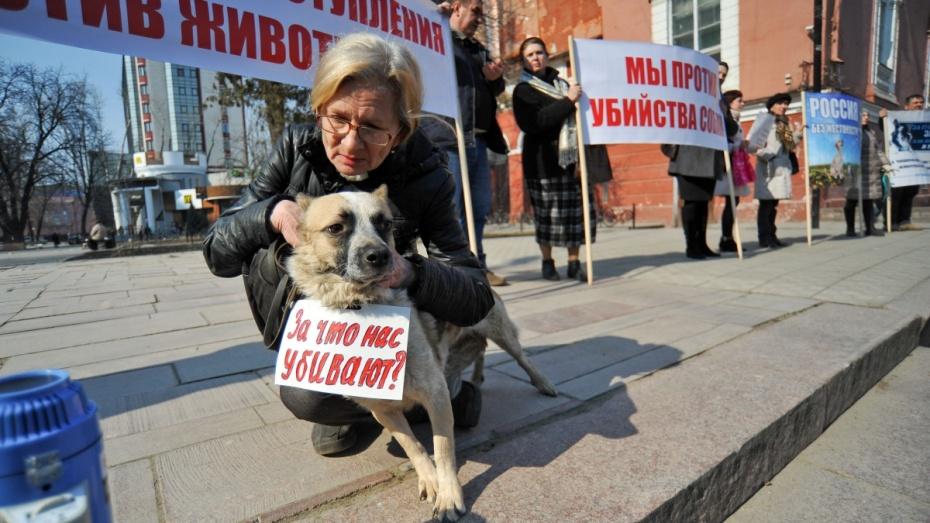 Воронежские зоозащитники потребовали прекратить незаконный отстрел животных
