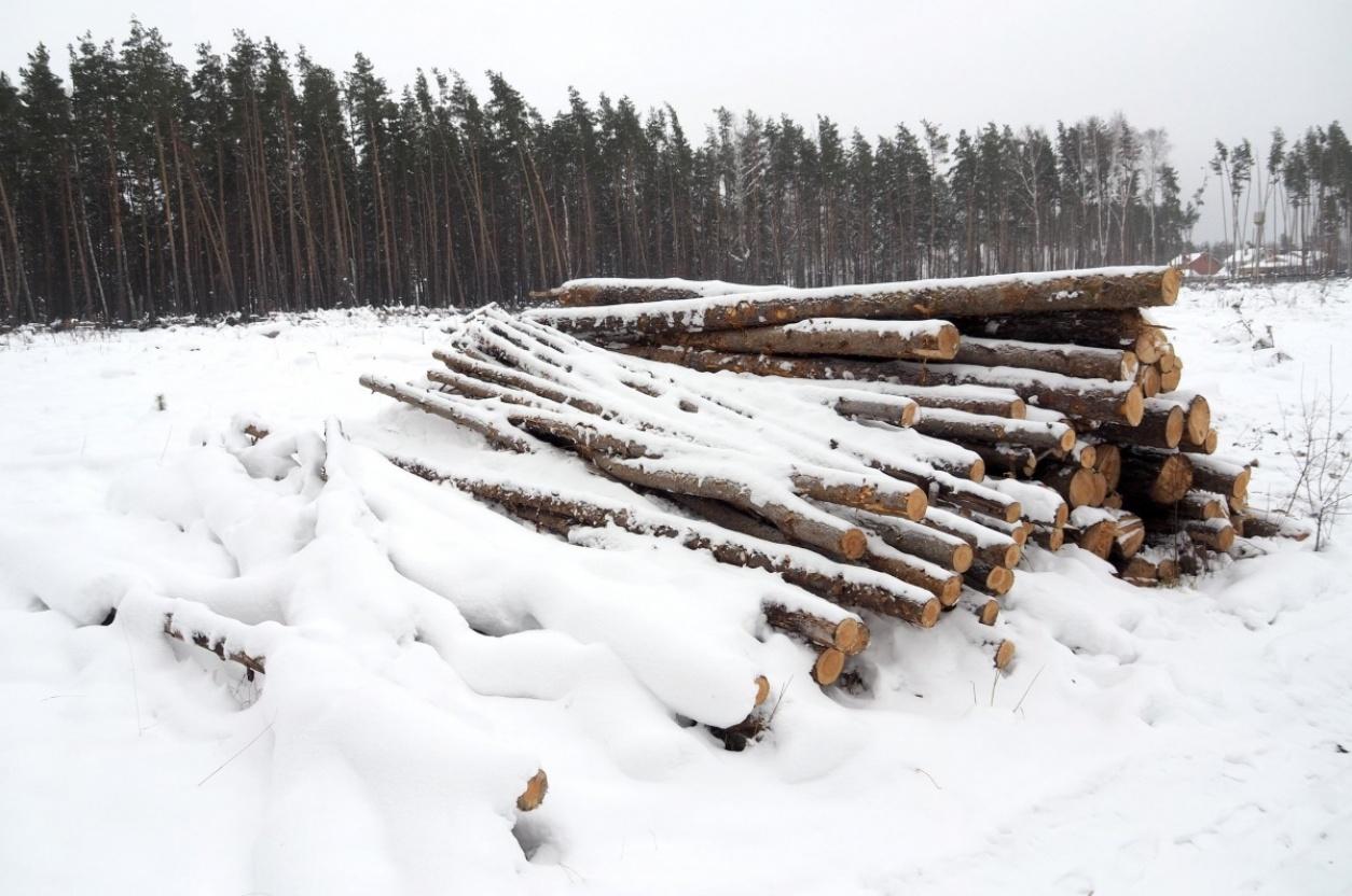 Спорные участок земель лесного фонда и сельхозназначения вырубка леса