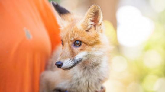 Волонтеры воронежского центра охраны животных попросили о помощи
