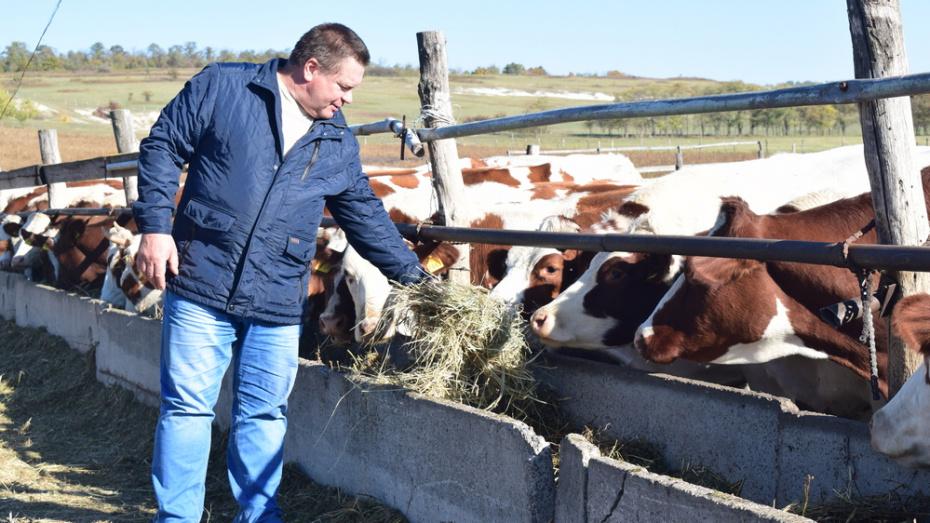 В Подгоренском районе фермер получил на развитие молочного животноводства 22 млн рублей