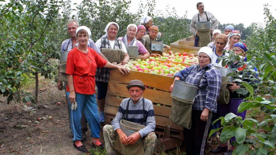 Зампред облправительства предложил воронежцам помочь фермерам с уборкой урожая