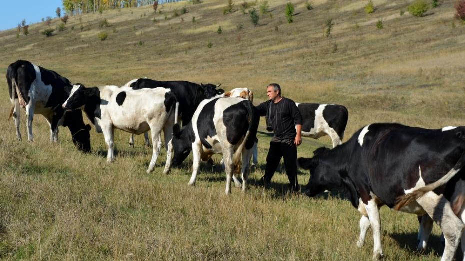 Нижнедевицкие фермеры получили субсидии