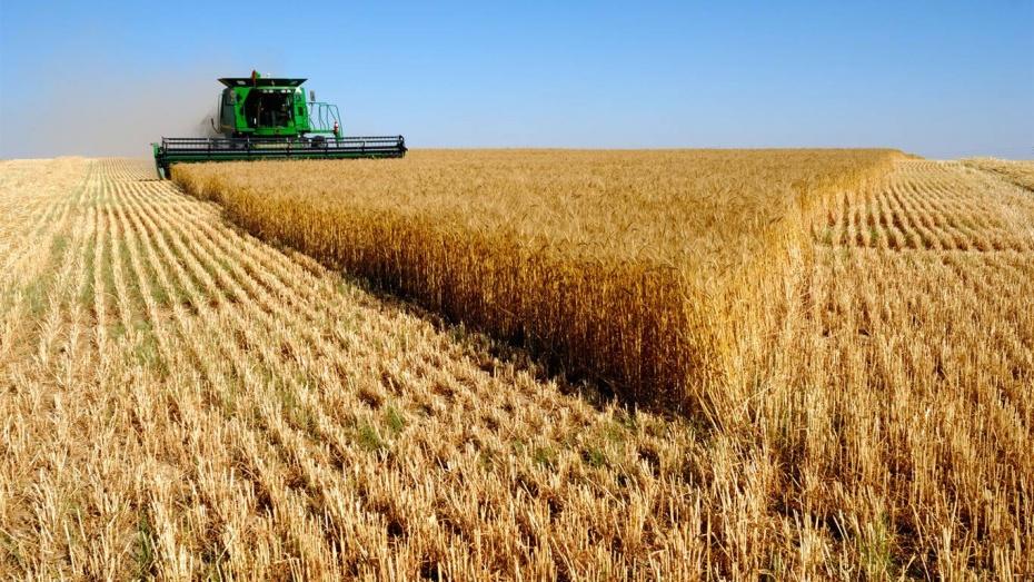 Аномальная жара серьезно повлияла на урожай зерновых в Воронежской области
