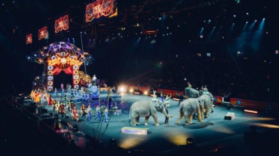 В Воронеже впервые пройдет фестиваль циркового искусства