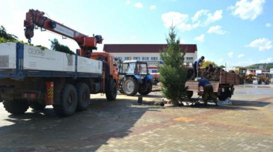 В Воробьевке на центральной площади высадили 4-метровую ель канадскую