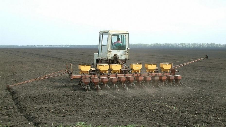Воронежской предприятие использовало пестициды при выращивании сельхозпродукции