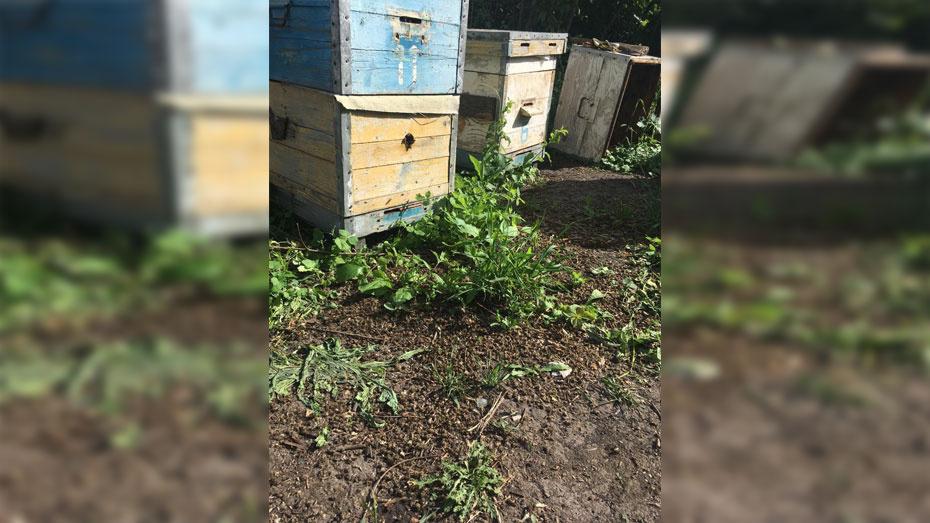 В Павловском районе на пасеках погибли пчелы
