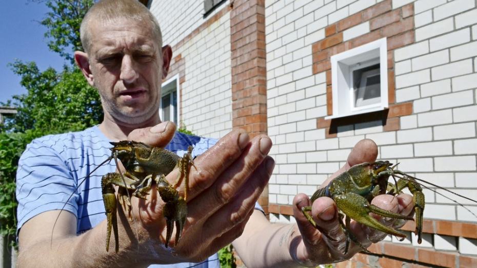 Житель Грибановского района решил создать КФХ по разведению раков