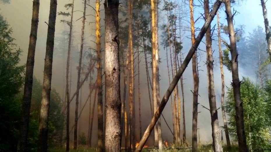 Глава Воронежской области поручил усилить патрулирование лесов