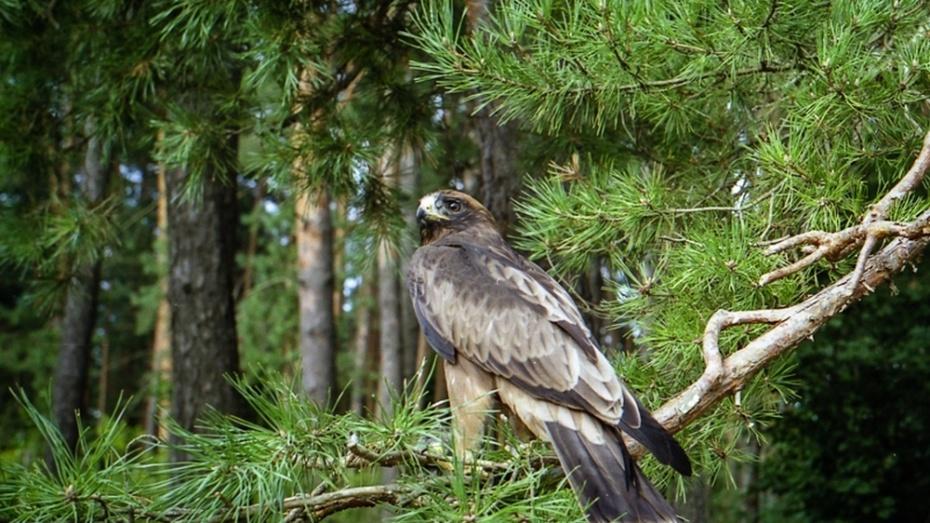 Картинки природа и обитатели воронежского заповедника