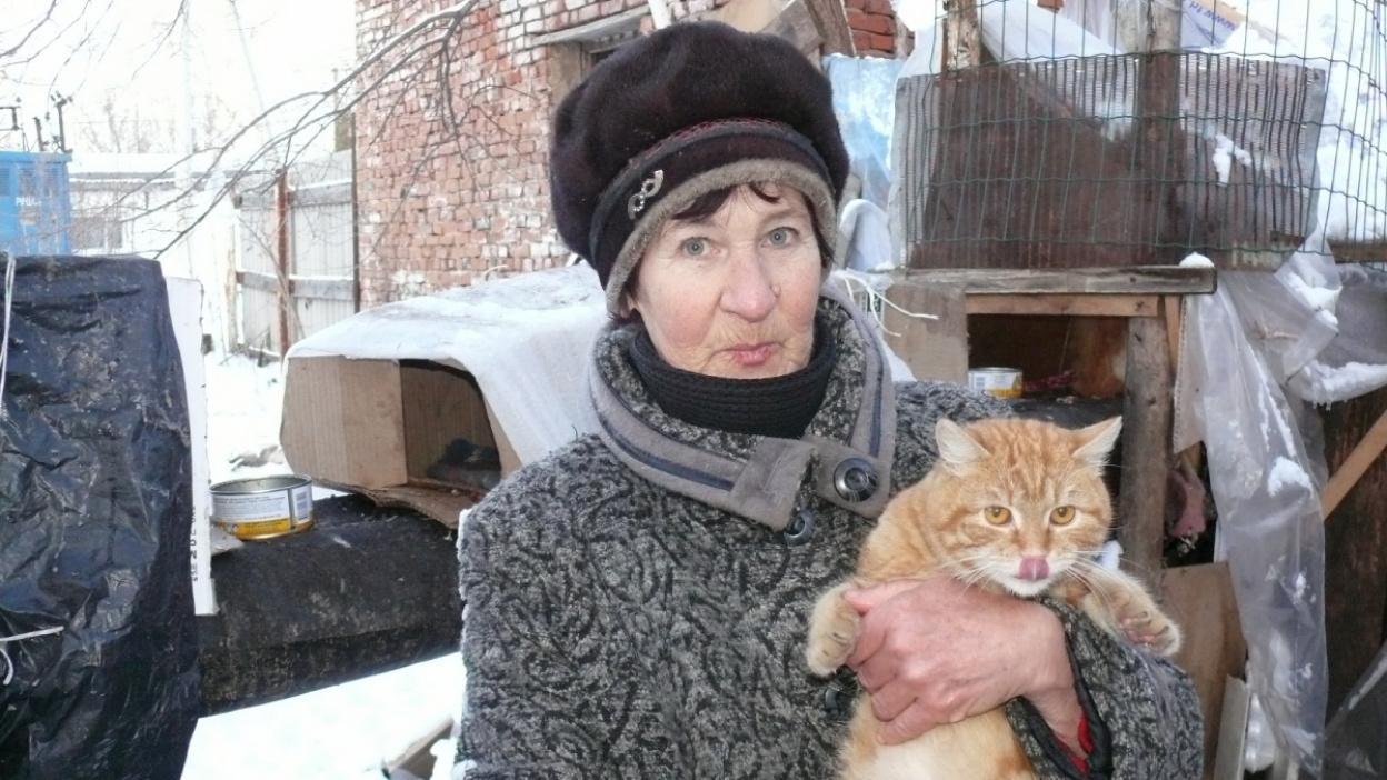 «Тоже живая душа». Бабушка устроила кошачье общежитие на теплотрассе в Воронежской области