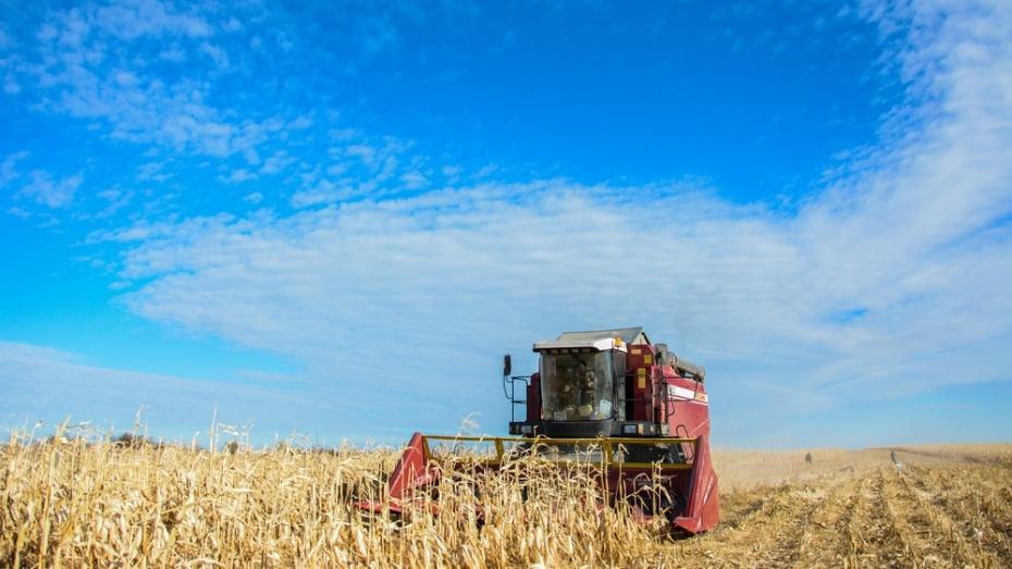 Аграрии Воронежской области собрали второй миллион тонн зерна