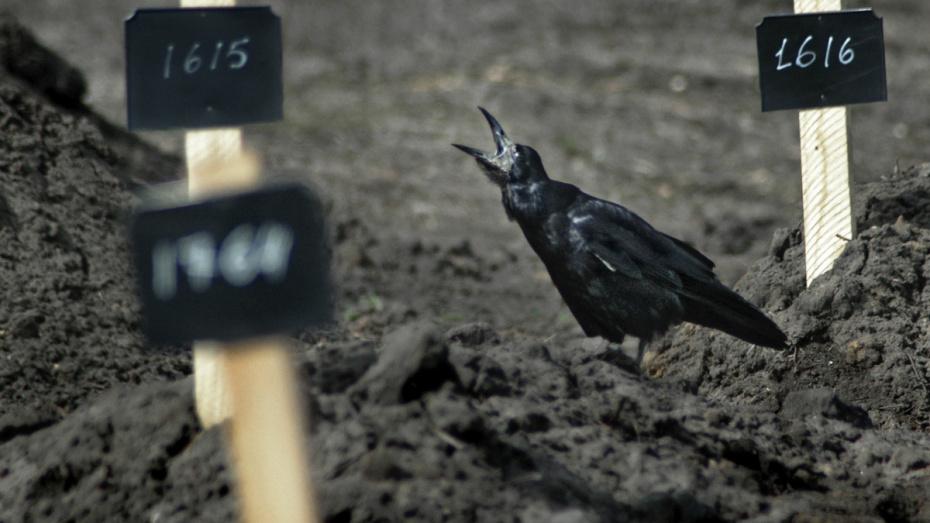 В Воронежской области личность пропавшего 12 лет назад установили по фотосовмещению