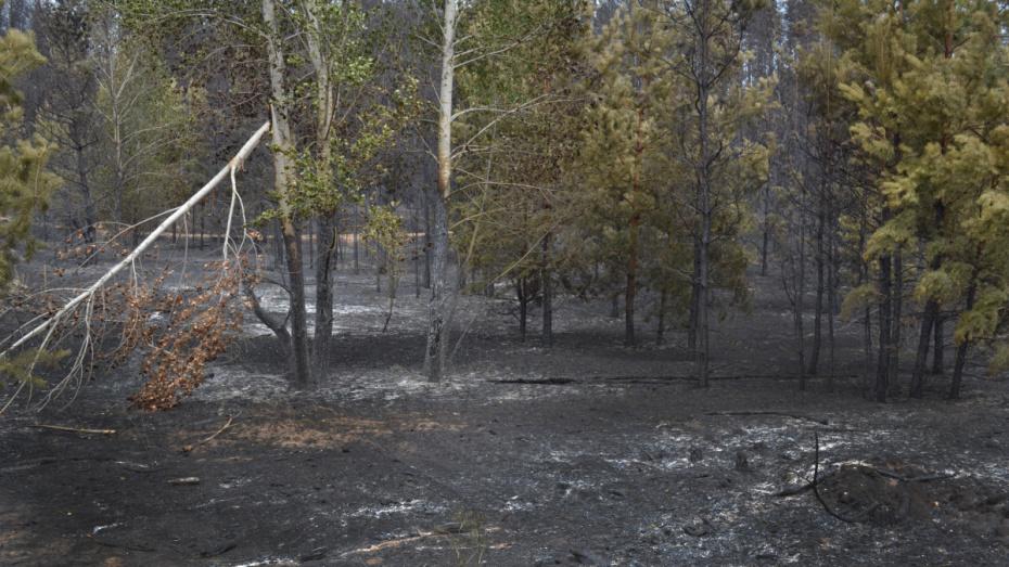 Ущерб от 2 крупных лесных пожаров в Воронежской области превысил 9 млн рублей