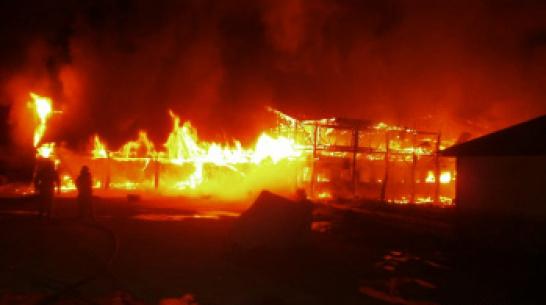 Часть Ломовского природного парка сгорела в Воронежской области