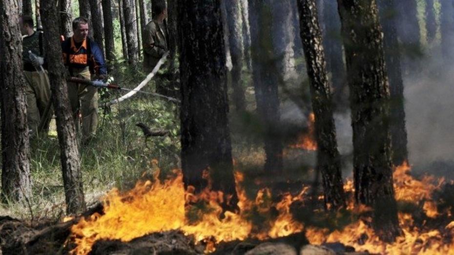 Площадь пожаров в Бурятии превысила 150 тыс га