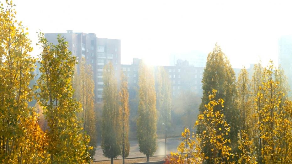 Смог над Воронежем образовался от загорания сухой травы в Подгорном