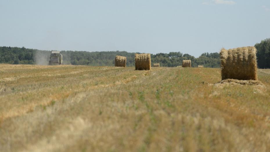 Минсельхоз поможет Воронежской области получить льготные кредиты АПК на 12 млрд рублей
