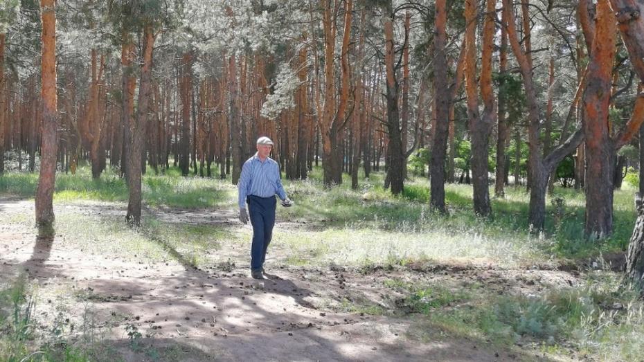 Павловский пенсионер очистил сосновый бор от 800 кг мусора