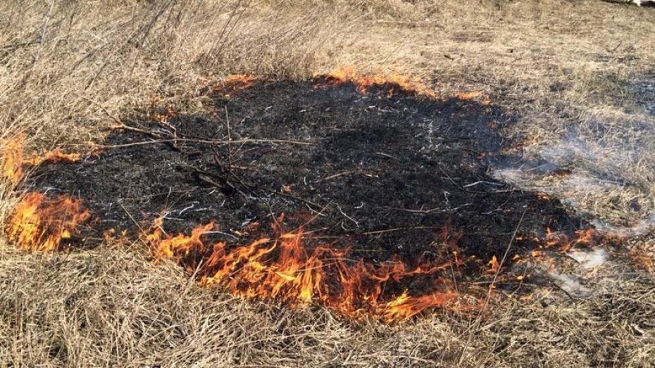 Правительство запретило выжигать сухую траву