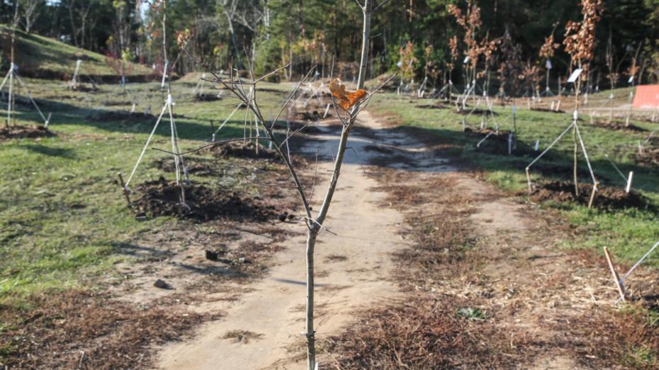 В Воронеже озеленили «Песчаный лог» для защиты от экстремалов