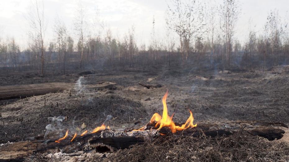 В Воронежской области количество ландшафтных пожаров выросло в 4 раза
