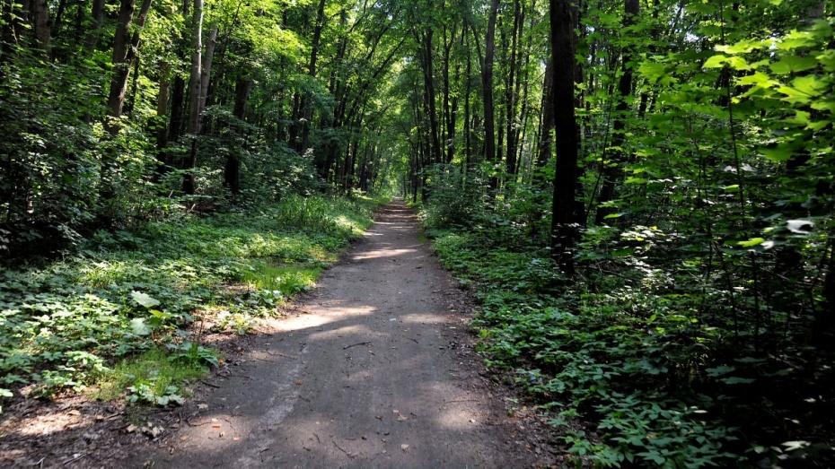 Расчищают леса вдоль дороги М-4 «Дон» вВоронежской области