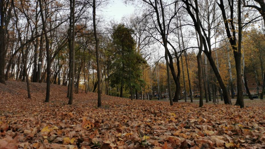 Погода в Воронеже побила температурный рекорд 7 ноября