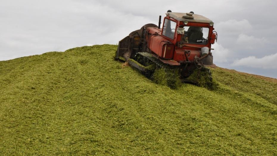 Павловские аграрии заготовили свыше 39 тыс тонн силоса