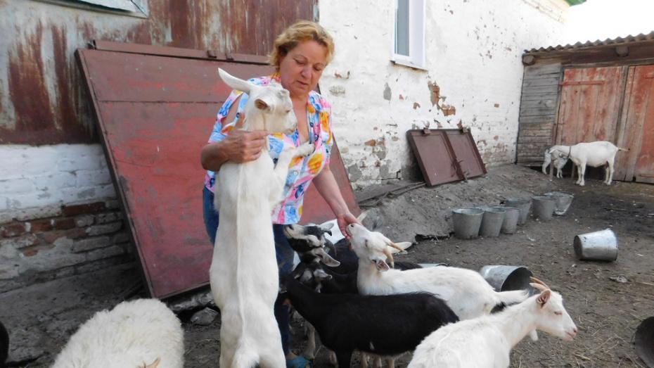 Борисоглебским фермерам выделили 7 млн рублей