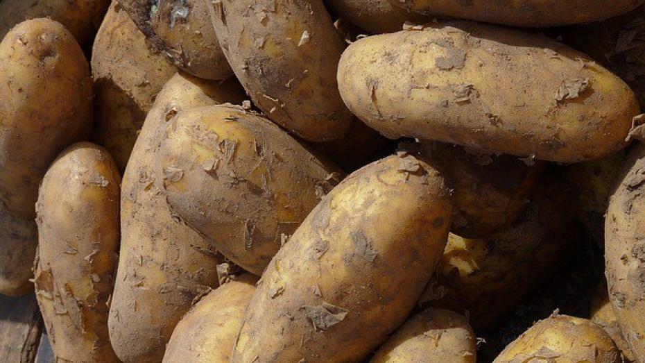 Россельхознадзор запретил ввоз вВоронеж свыше 25 тонн картофеля из государства Украины