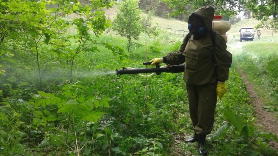 В Воронежской области вдвое увеличили план обработки территорий от комаров
