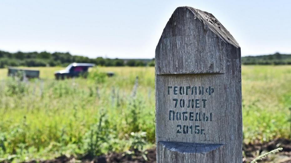 На бутурлиновском геоглифе «70 лет Победы» дубы дали самый большой прирост за 5 лет