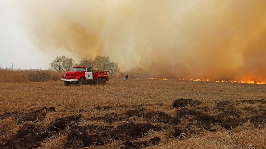 В Воронежской области с ландшафтным пожаром на площади более 100 га боролись 5 часов