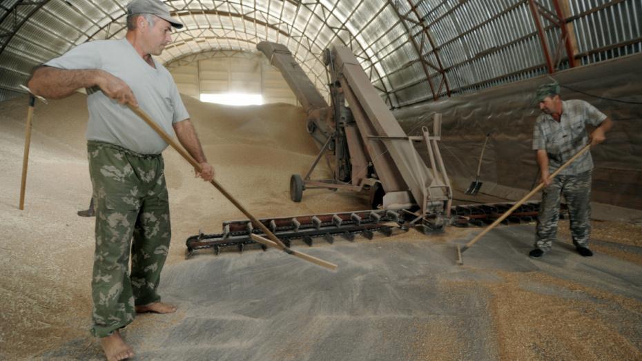 Воронежская область экспортировала сельхозпродукции на 497 млн долларов за год
