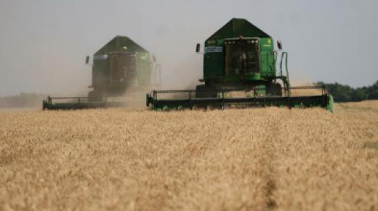 В Верхнемамонском районе планируют собрать 110 тыс т ранних зерновых