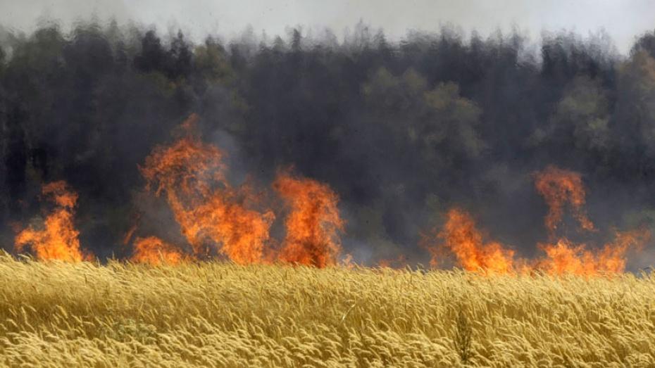 В Кантемировском районе сгорело 40 гектаров пшеницы