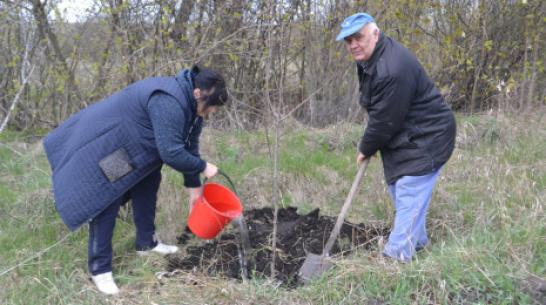 В Ольховатском районе посадят 750 фруктовых деревьев