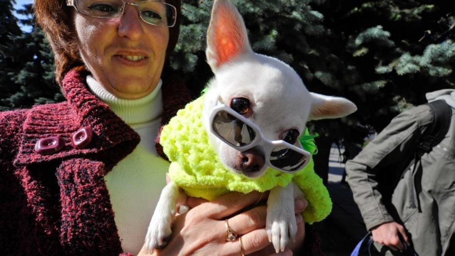 В День города воронежцы увидят костюмированный парад собак