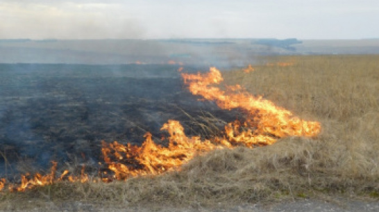 В Воронежской области выгорела часть музея-заповедника «Дивногорье»