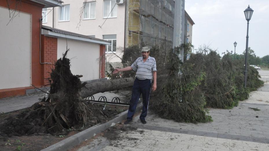В Репьевке сильный ветер вырвал с корнем 10-метровую ель