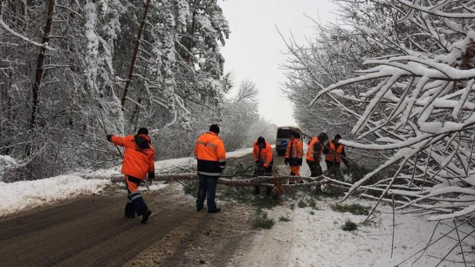 ВВоронежской области снегопад обесточил 38 населенных пунктов в различных районах