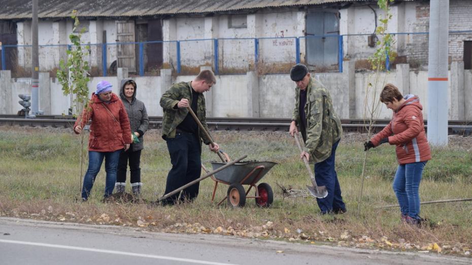 В поселке Подгоренский высадили 160 саженцев деревьев и кустарников