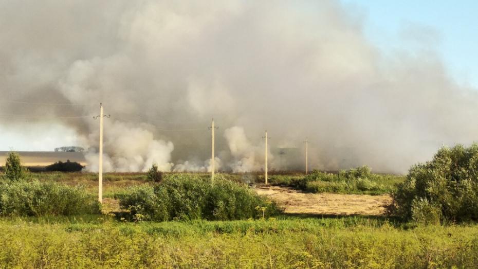 В Новоусманском районе недалеко от садоводческого товарищества выгорели трава и камыш