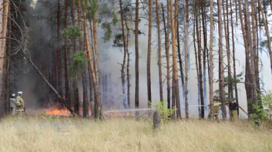 С пожаром, повредившим более 12 га леса в Воронежской области, боролись 3 дня