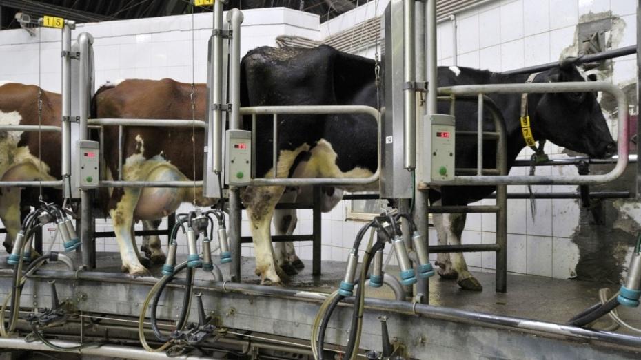 Воронежские власти найдут инвестора для строительства молокозавода в Борисоглебске