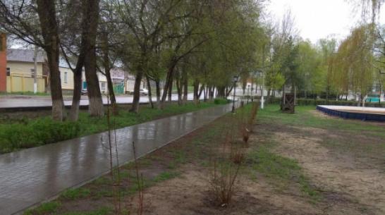 В Павловске высадили более 600 саженцев деревьев и кустарников