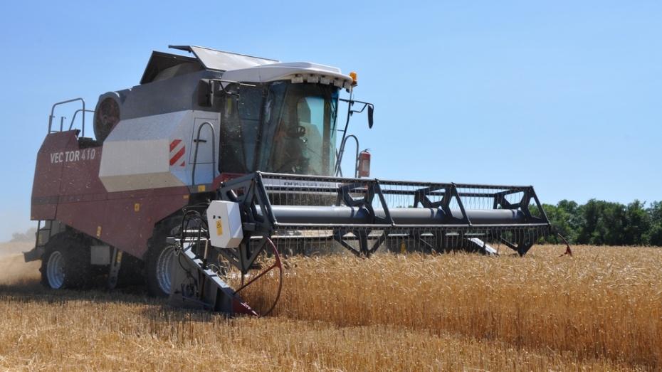 Павловские аграрии намолотили 85,5 тыс т зерна