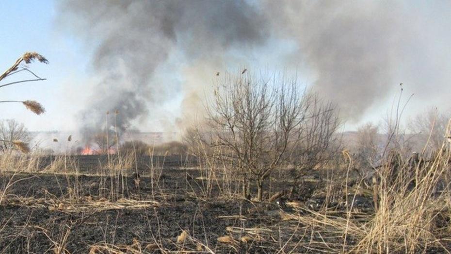 В семилукской Стрелице пожарные 2 часа тушили сухой камыш